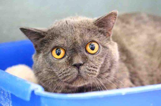 לואי חתול לאימוץ אגודת צער בעלי חיים בישראל