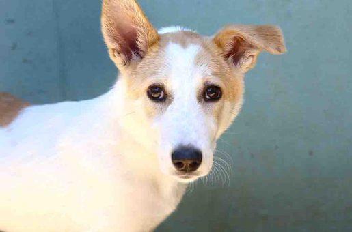 לולי כלבה לאימוץ אגודת צער בעלי חיים בישראל