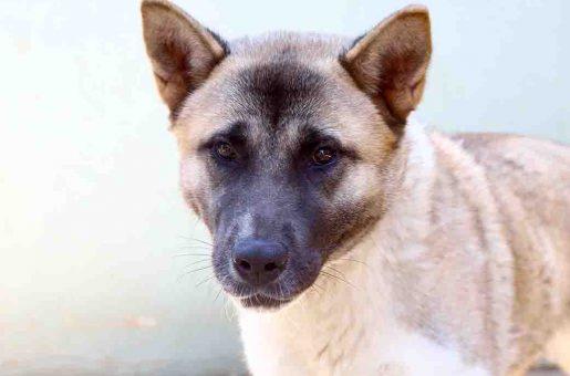 זינה כלבה לאימוץ אגודת צער בעלי חיים בישראל