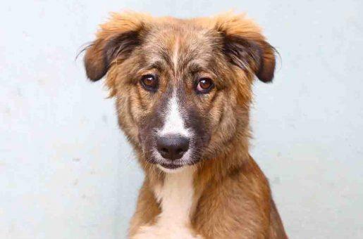 ונוס – כלבה לאימוץ – אגודת צער בעלי חיים