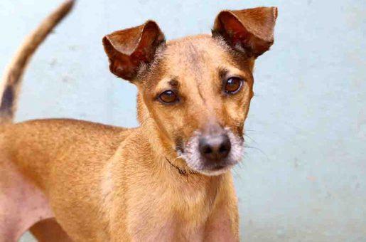חמודי – כלב לאימוץ – אגודת צער בעלי חיים בישראל