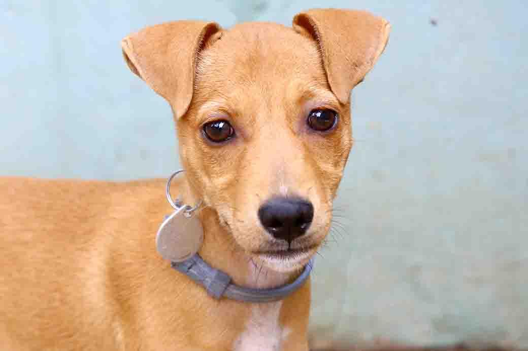 לילי – כלבה לאימוץ – אגודת צער בעלי חיים בישראל