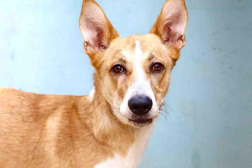 דקסטר – כלב לאימוץ – אגודת צער בעלי חיים בישראל