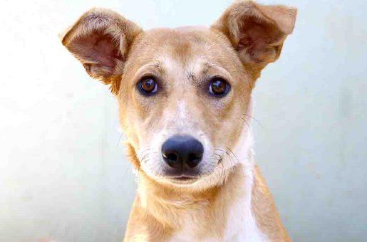 לוק כלב לאימוץ אגודת צער בעלי חיים בישראל