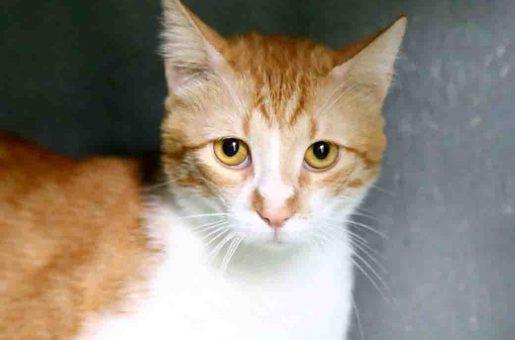 ניאו – חתול לאימוץ – אגודת צער בעלי חיים בישראל