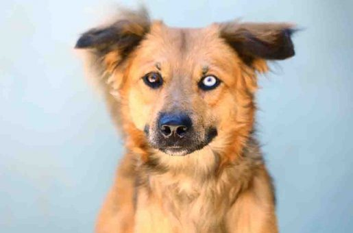 הקס כלב לאימוץ אגודת צער בעלי חיים