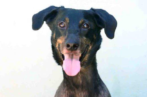 ג'קי כלב לאימוץ אגודת צער בעלי חיים בישראל