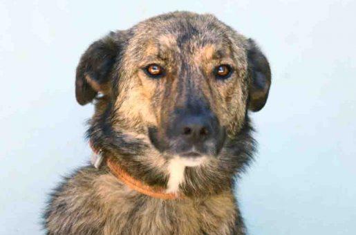 לוסי כלבה לאימוץ אגודת צער בעלי חיים בישראל