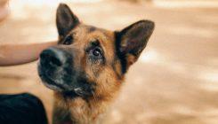 חרדת נטישה אצל כלבים - אגודת צער בעלי חיים בישראל