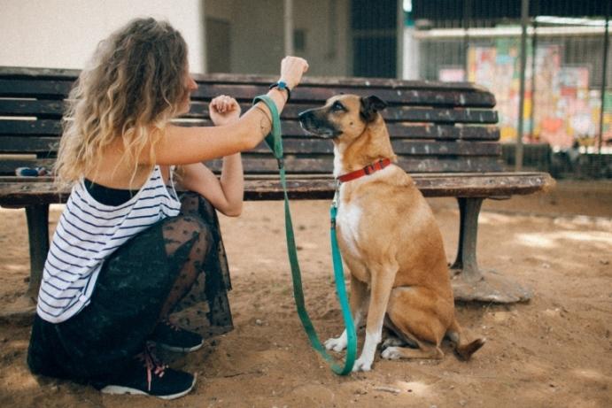 קסם - כלבה לאימוץ - אגודת צער בעלי חיים בישראל