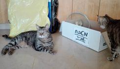 עוברים דירה עם החתול והכלב - אגודת צער בעלי חיים בישראל