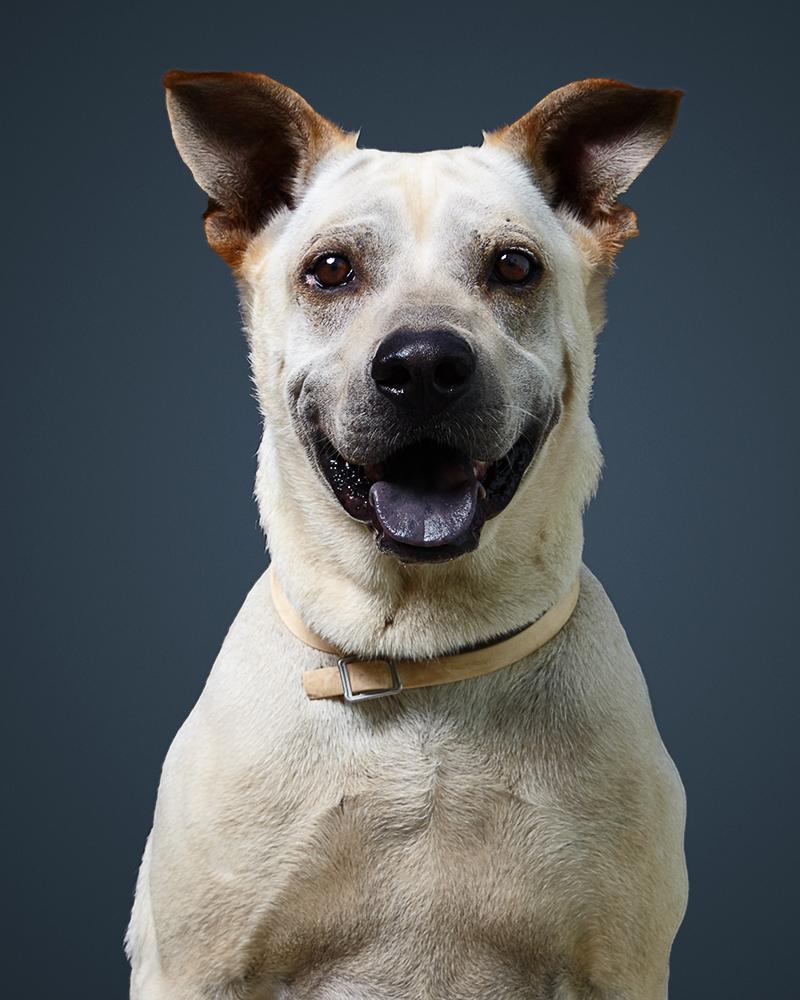 ברי - כלב לאימוץ - אגודת צער בעלי חיים בישראל