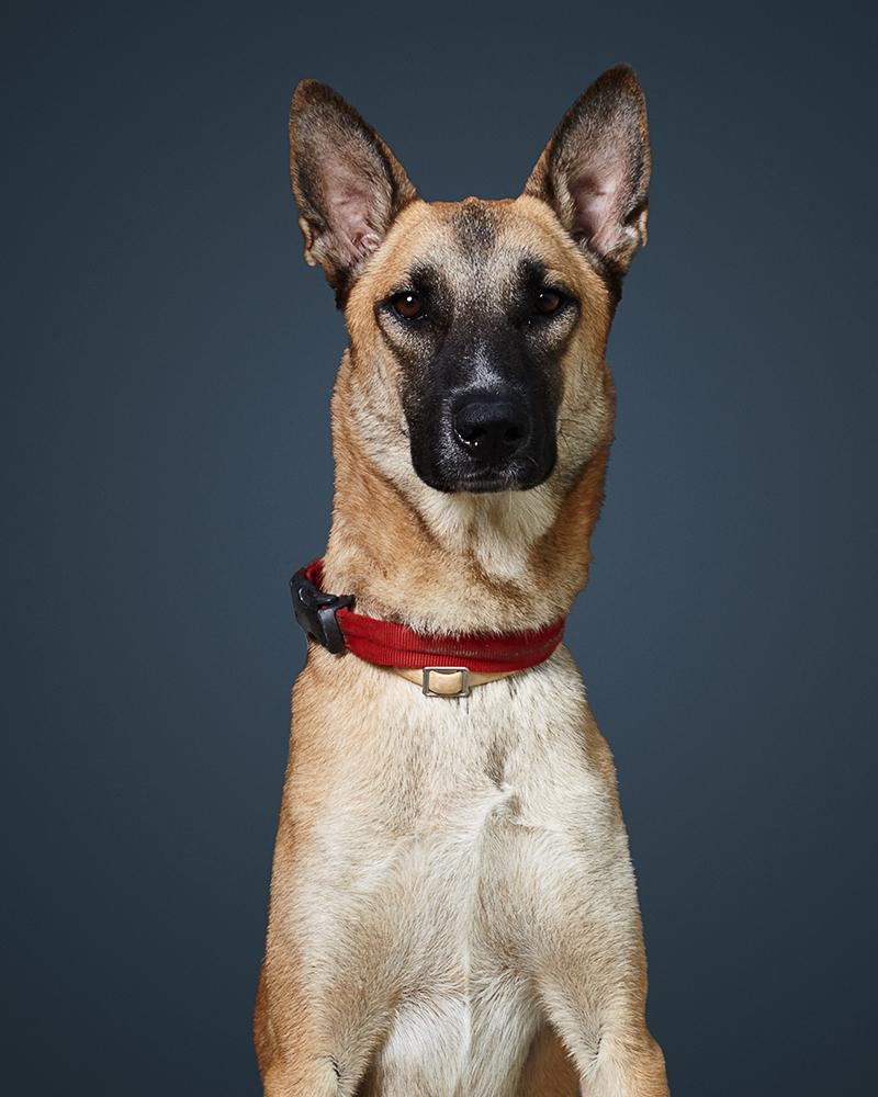 לב - כלב לאימוץ - אגודת צער בעלי חיים בישראל