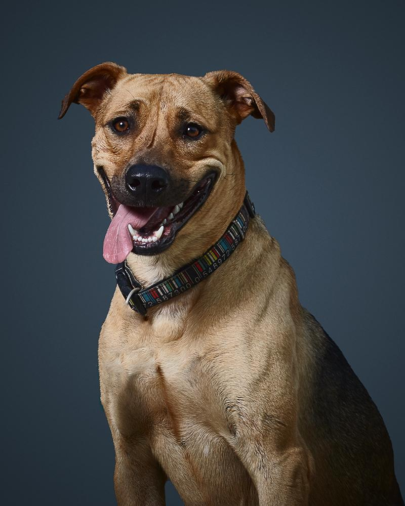 ליאו - כלב לאימוץ - אגודת צער בעלי חיים בישראל