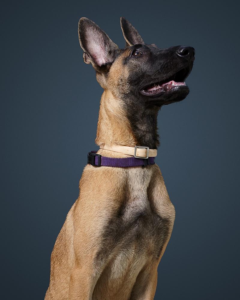 לסי - כלבה לאימוץ - אגודת צער בעלי חיים בישראל