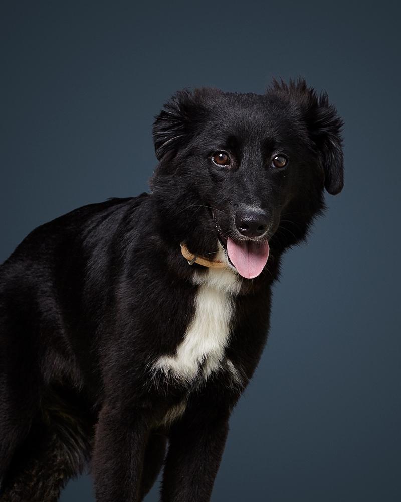 מירנדה - כלבה לאימוץ - אגודת צער בעלי חיים בישראל