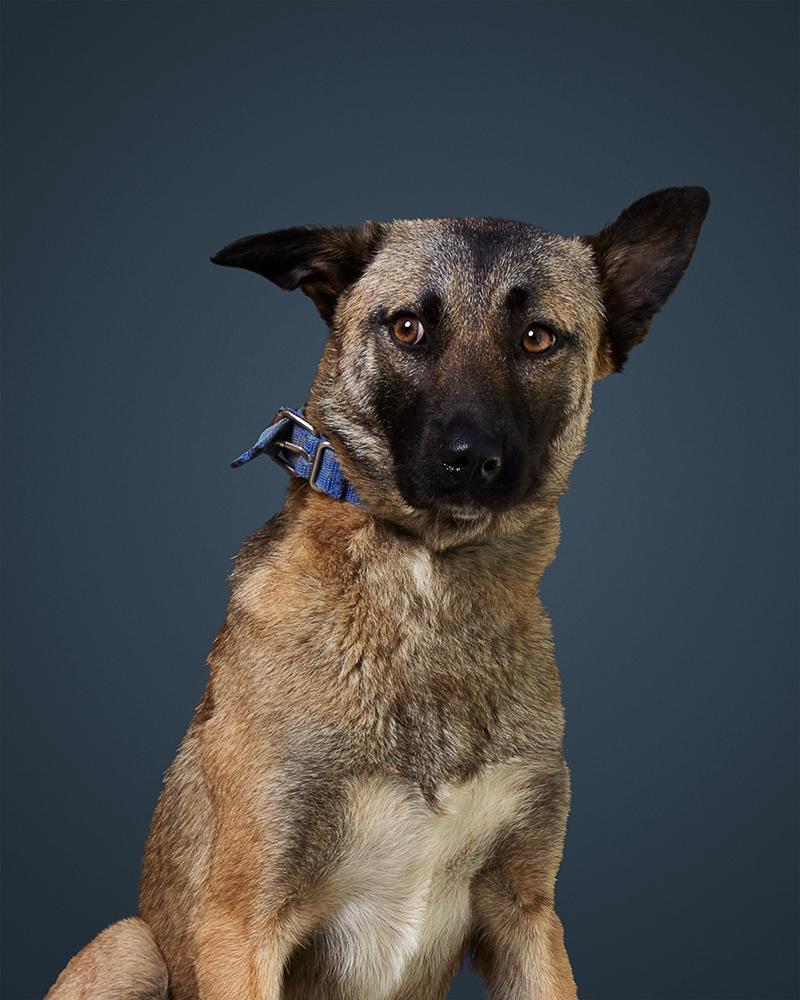 נלה - כלבה לאימוץ - אגודת צער בעלי חיים בישראל