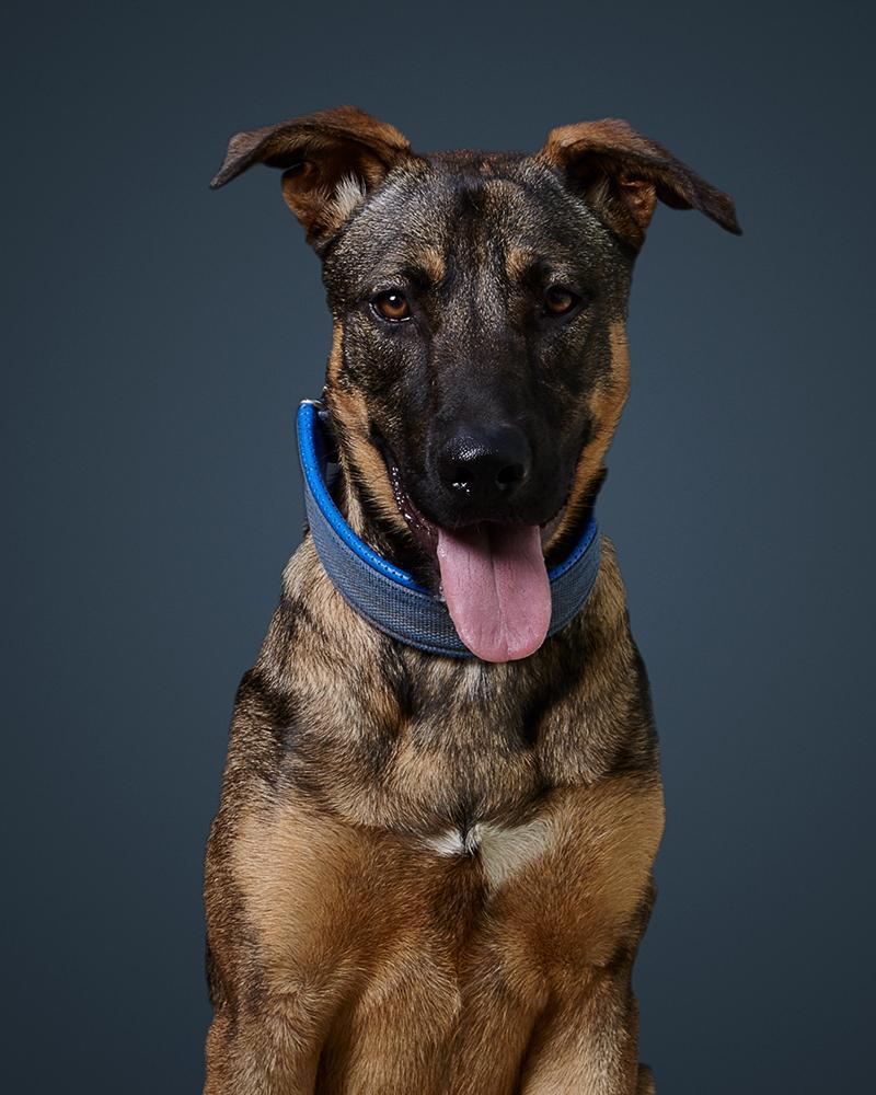 נס - כלבה לאימוץ - אגודת צער בעלי חיים בישראל