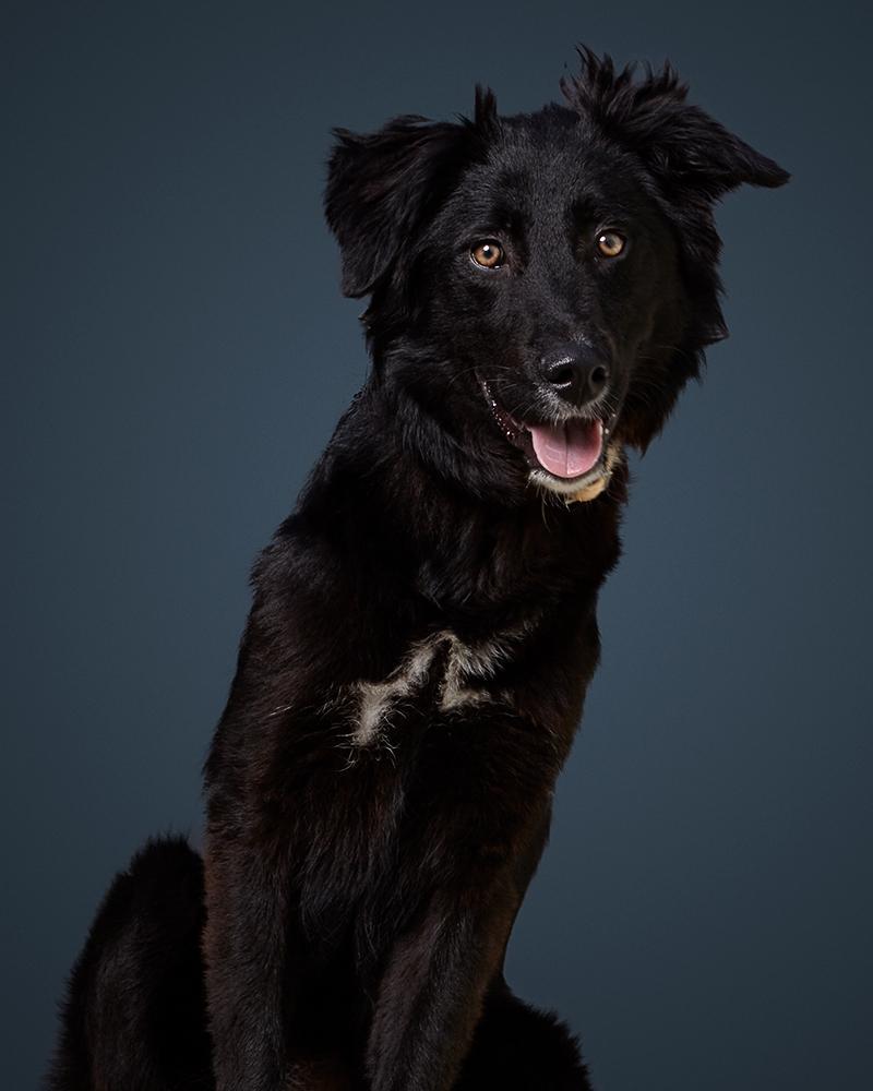 צ'ילי - כלבה לאימוץ - אגודת צער בעלי חיים בישראל