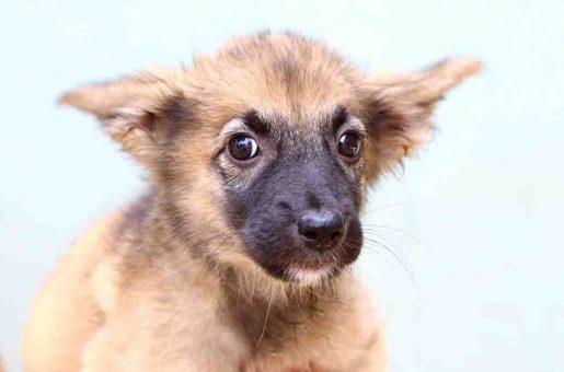 אריאלי כלבה לאימוץ אגודת צער בעלי חיים בישראל