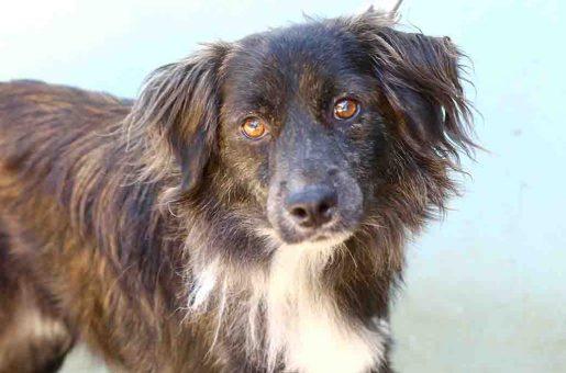 צ'יקו כלב לאימוץ אגודת צער בעלי חיים בישראל