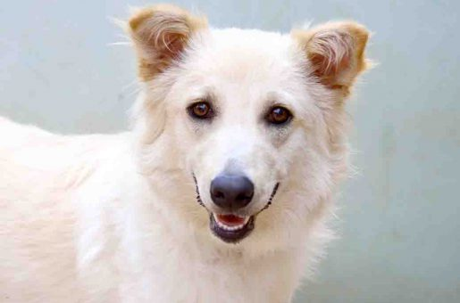 טומי כלב לאימוץ אגודת צער בעלי חיים בישראל