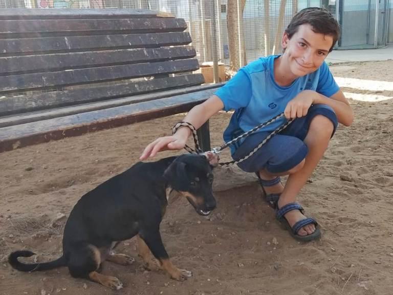 ילדים ובעלי חיים - אגודת צער בעלי חיים בישראל