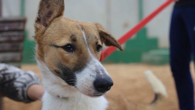 פרינססה - כלבה לאימוץ - אגודת צער בעלי חיים בישראל