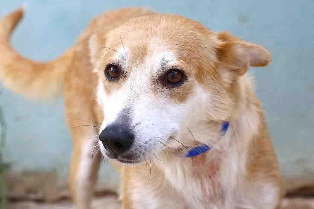 לושה כלבה לאימוץ אגודת צער בעלי חיים בישראל