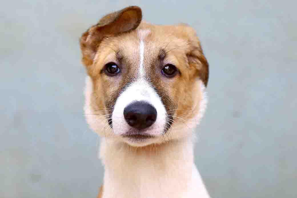 פרינססה כלבה לאימוץ אגודת צער בעלי חיים בישראל
