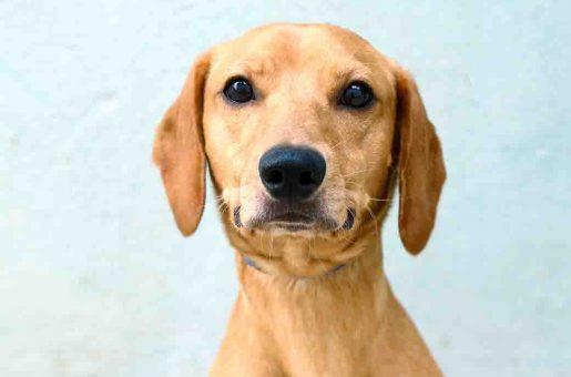 דון כלב לאימוץ אגודת צער בעלי חיים בישראל