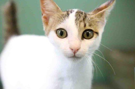 אין שם חתולה לאימוץ אגודת צער בעלי חיים בישראל