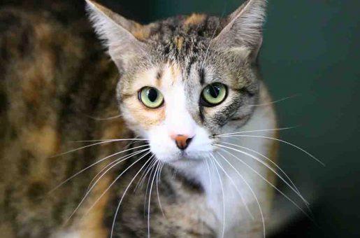 מרתה חתולה לאימוץ אגודת צער בעלי חיים בישראל
