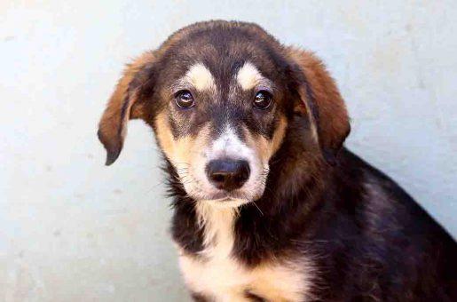 עוגי כלב לאימוץ אגודת צער בעלי חיים בישראל