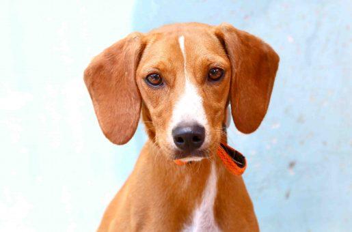 וניל כלבה לאימוץ אגודת צער בעלי חיים בישראל