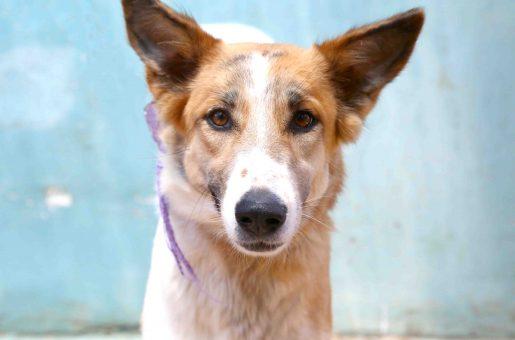 מאטי כלבה לאימוץ אגודת צער בעלי חיים בישראל