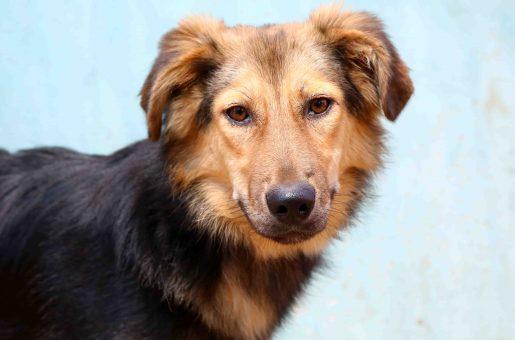 לואי כלב לאימוץ אגודת צער בעלי חיים בישראל