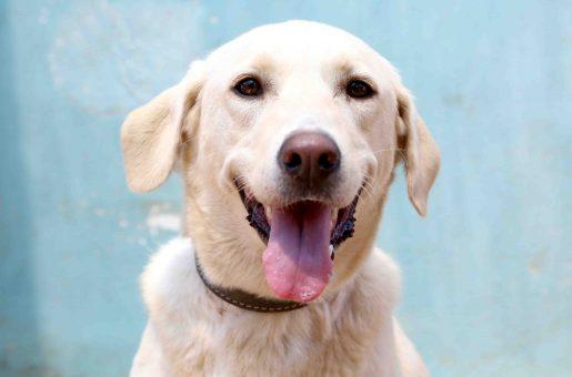לילי כלבה לאימוץ אגודת צער בעלי חיים בישראל