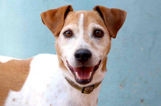 מסי כלב לאימוץ אגודת צער בעלי חיים בישראל