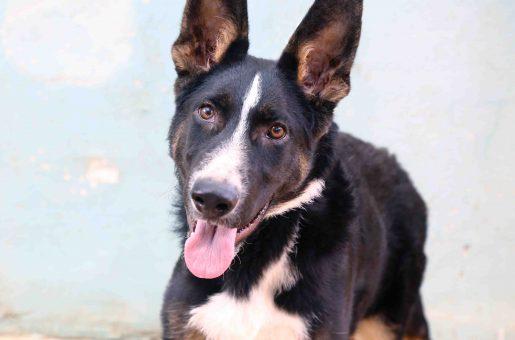 חץ כלב לאימוץ אגודת צער בעלי חיים בישראל