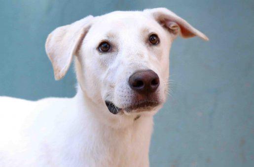 יורי כלב לאימוץ אגודת צער בעלי חיים בישראל