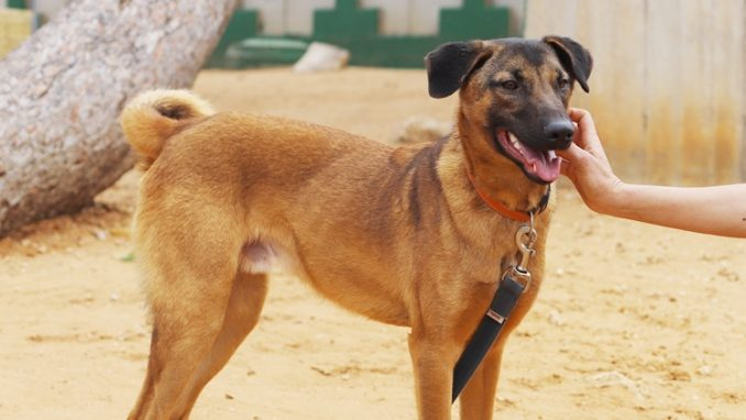 טוטו - כלב לאימוץ - אגודת צער בעלי חיים בישראל