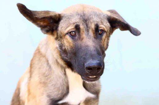 ג'ון כלב לאימוץ אגודת צער בעלי חיים בישראל