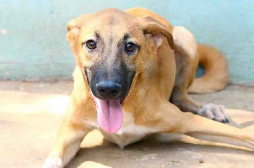 בלנדיטה כלבה לאימוץ אגודת צער בעלי חיים בישראל
