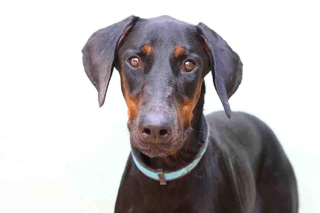 ליידה כלבה לאימוץ אגודת צער בעלי חיים בישראל