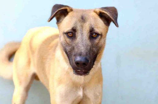 זאוס כלב לאימוץ אגודת צער בעלי חיים בישראל