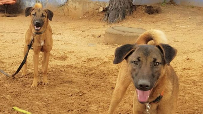 שאול - טוטו - כלב לאימוץ - אגודת צער בעלי חיים בישראל