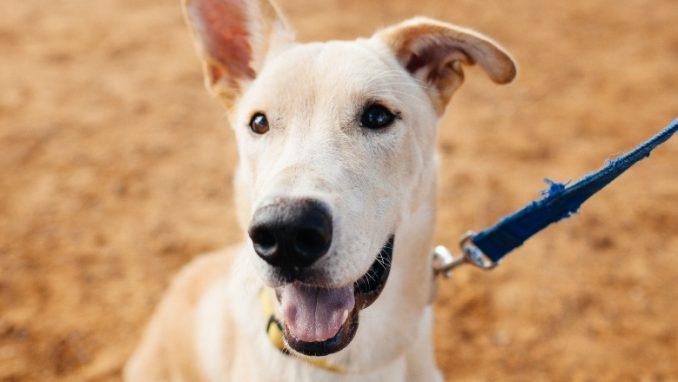ג'ונה - כלב לאימוץ - אגודת צער בעלי חיים בישראל