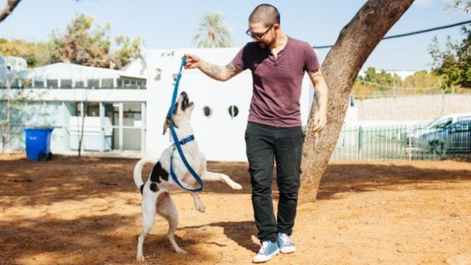 כתם - כלבה לאימוץ - אגודת צער בעלי חיים בישראל