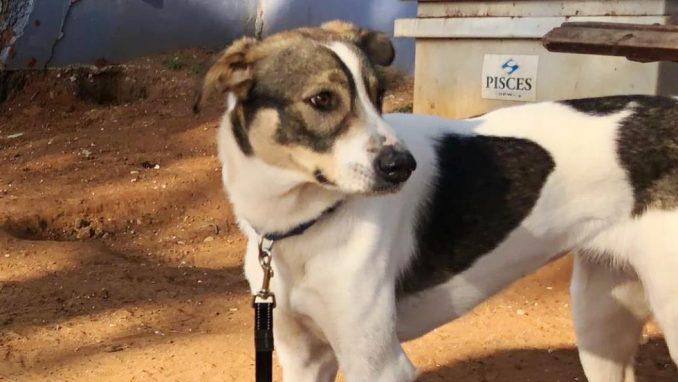 כתם – כלבה לאימוץ – אגודה צער בעלי חיים ישראל
